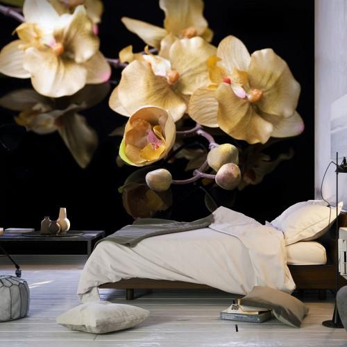 Fotomurale - Orchids in ecru color - Quadri e decorazioni