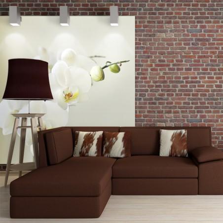 Fotomurale - Bianca orchidea - Quadri e decorazioni