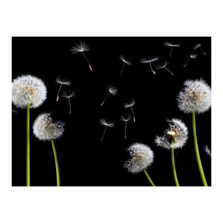 Fotomurale - Soffioni nel vento - Quadri e decorazioni