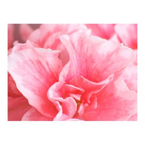 Fotomurale - Fiori d'azalea rosa - Quadri e decorazioni