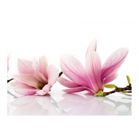 Fotomurale - Fior di magnolia - Quadri e decorazioni