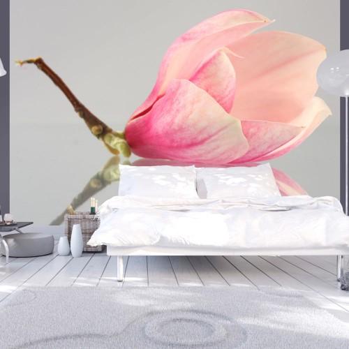 Fotomurale - Fiore di magnolia solitario - Quadri e decorazioni