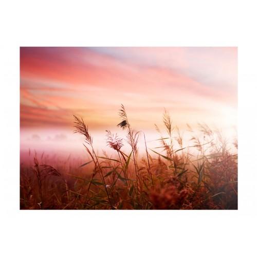 Fotomurale - Prato di campagna all'alba - Quadri e decorazioni