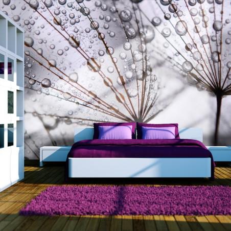 Fotomurale - Rugiada mattutina su soffioni - Quadri e decorazioni