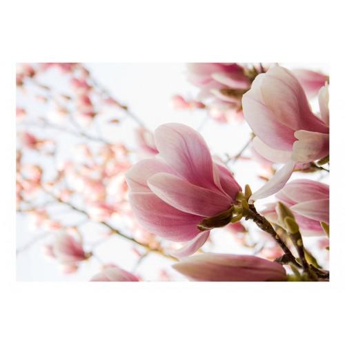 Fotomurale - Magnolia rosa - Quadri e decorazioni