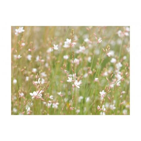 Fotomurale - Piccoli fiorellini delicati - Quadri e decorazioni