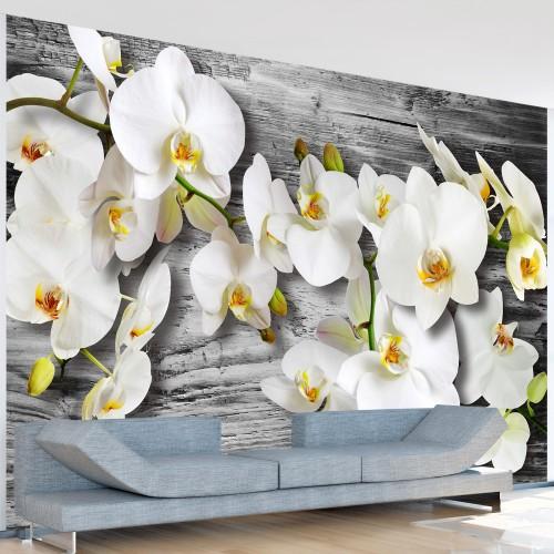 Fotomurale - Orchidee insensibili III - Quadri e decorazioni