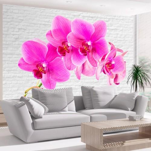 Fotomurale - Eccitazione rosa - Quadri e decorazioni