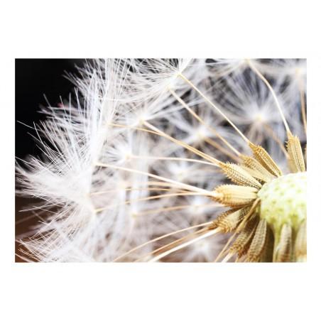 Fotomurale - Fluffy dandelion - Quadri e decorazioni