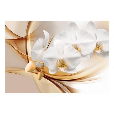 Fotomurale - Fiore di orchidea - Quadri e decorazioni