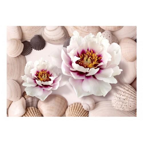 Fotomurale - Flowers and Shells - Quadri e decorazioni