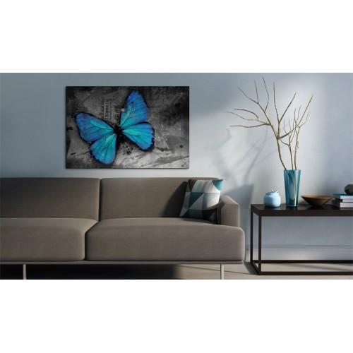 Quadro - Studio di una farfalla - Quadri e decorazioni