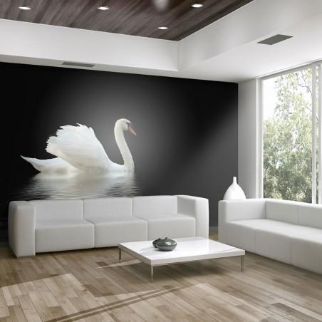 Fotomurale - cigno (bianco e nero) - Quadri e decorazioni