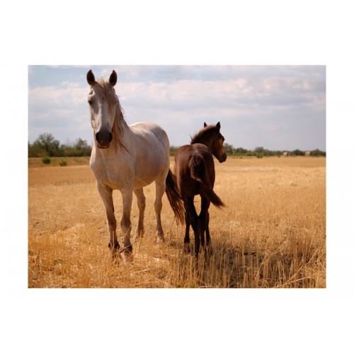 Fotomurale - Cavallo e puledro - Quadri e decorazioni