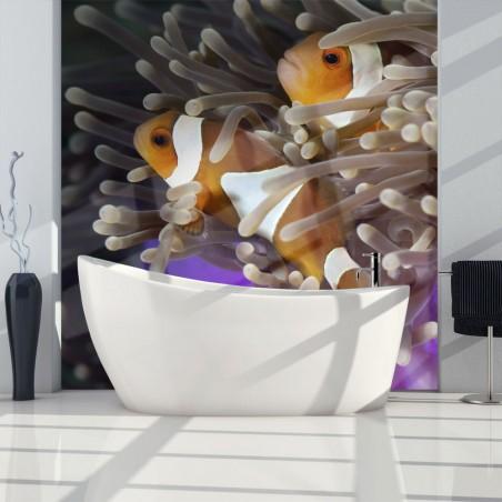 Fotomurale - Pesci pagliaccio - Quadri e decorazioni