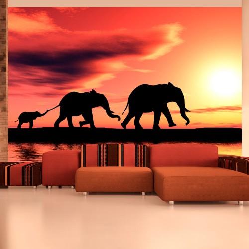 Fotomurale - elefanti: famiglia - Quadri e decorazioni