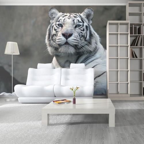 Fotomurale - Tigre bengala allo zoo - Quadri e decorazioni