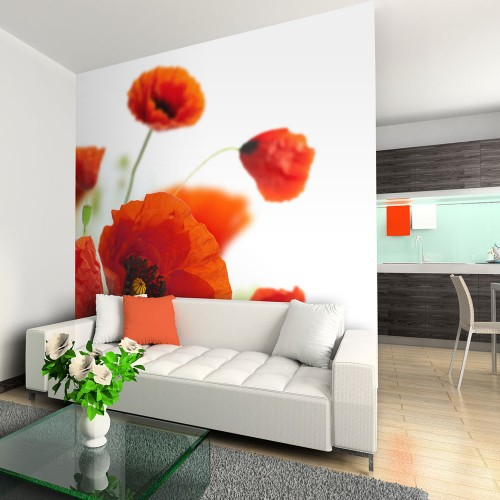 Fotomurale - Poppies on the wihite background - Quadri e decorazioni