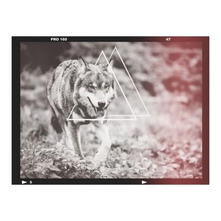 Fotomurale - lupo - fotografia - Quadri e decorazioni