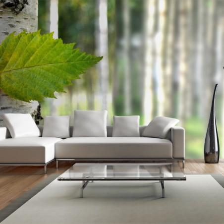 Fotomurale XXL - Foglia di betulla - Quadri e decorazioni
