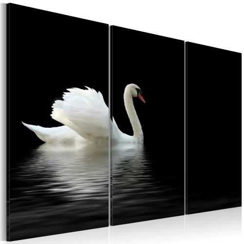 Quadro - Cigno bianco solitario - Quadri e decorazioni