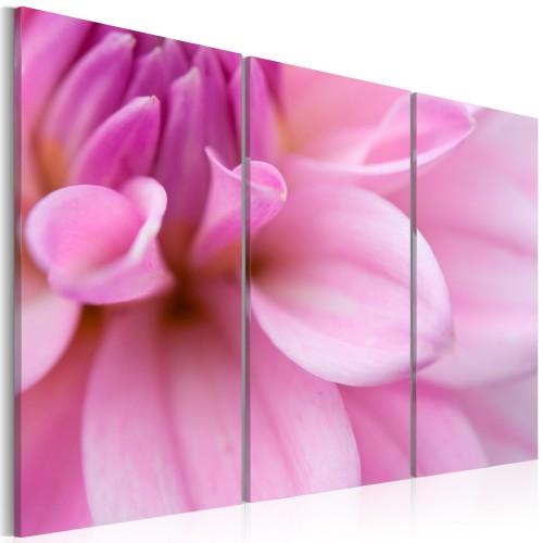 Quadro - Dalia rosa - Quadri e decorazioni