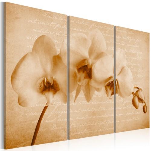 Quadro - orchidea (vintage) - Quadri e decorazioni