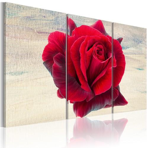 Quadro - Rosa lirica - Quadri e decorazioni