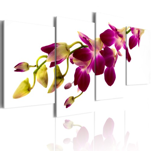 Quadro - Splendore dell'orchidea - Quadri e decorazioni