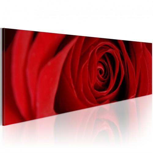 Quadro - Rosa del nord - Quadri e decorazioni