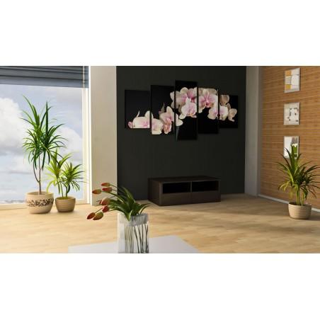 Quadro - Orchidea su sfondo contrastante - Quadri e decorazioni
