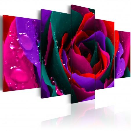 Quadro - Multicoloured rose - Quadri e decorazioni