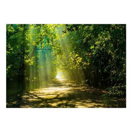 Fotomurale adesivo - Road...