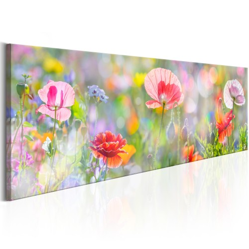 Quadro - Rainbow of Morning Poppies - Quadri e decorazioni