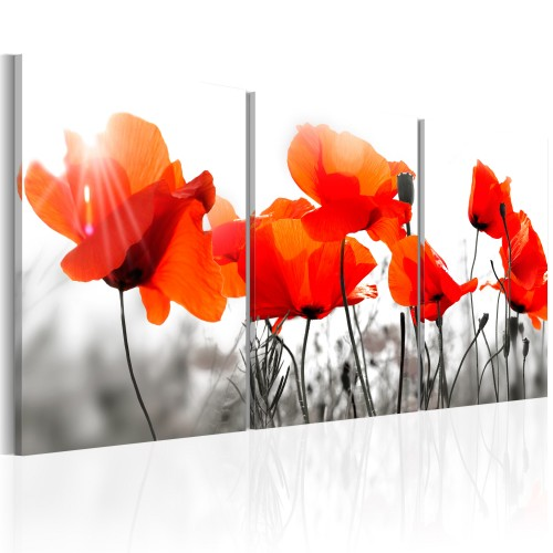 Quadro - Charming Poppies - Quadri e decorazioni