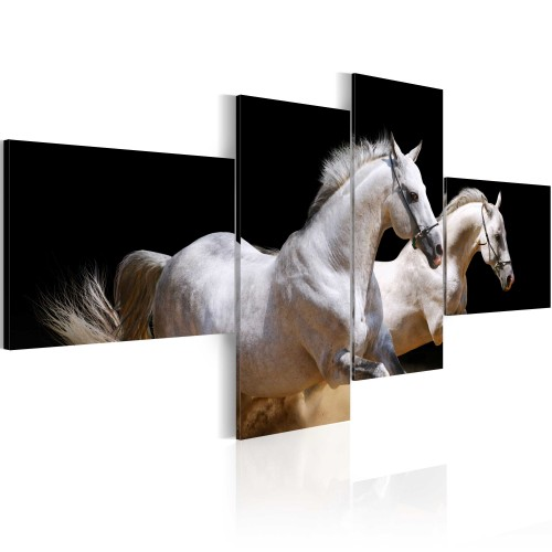 Quadro - Mondo degli animali: cavalli bianchi al galoppo - Quadri e decorazioni