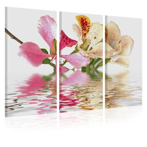 Quadro - Orchidea a pois-pallini - Quadri e decorazioni