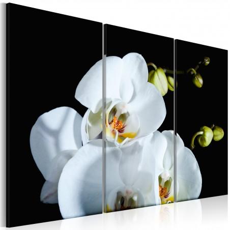 Quadro - Orchidea candida - Quadri e decorazioni