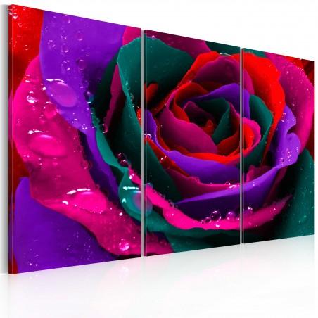 Quadro - Rosa iridata - Quadri e decorazioni