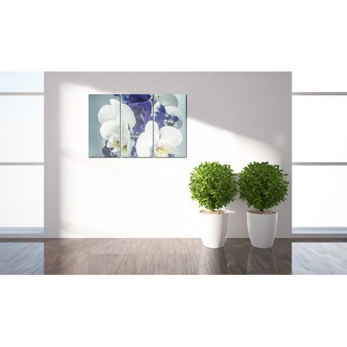 Quadro - Orchidee chimeriche - Quadri e decorazioni