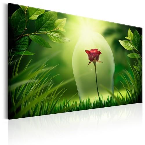 Quadro - Magical Rose - Quadri e decorazioni