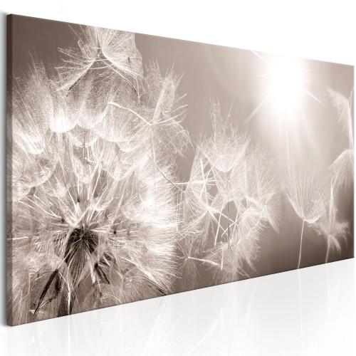 Quadro - Summer Dandelions - Quadri e decorazioni
