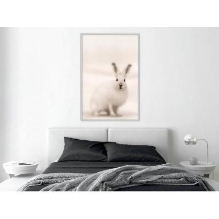 Poster - Curious Rabbit