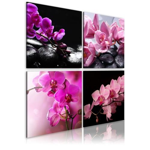 Quadro - Orchidee più belle che mai - Quadri e decorazioni