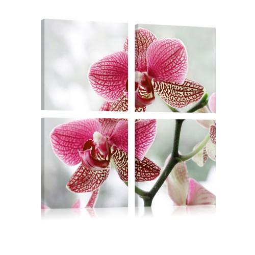 Quadro - Orchidea di fantasia - Quadri e decorazioni